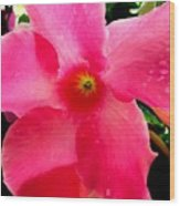 Pink Pinwheel Wood Print