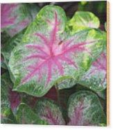 Pink Plants Wood Print
