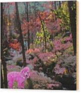 Pink Poodle Paradise Wood Print