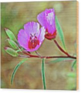Pink Poppies In Rancho Santa Ana Botanic Garden In Claremont-california Wood Print