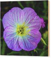 Pink Primrose Wood Print