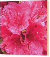 Pink Rain Wood Print