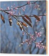 Pink Redbud Tree Blossoms- Fine Art Wood Print