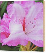 Pink Rhododendron Art Print Floral Canvas Rhodies Baslee Troutman Wood Print