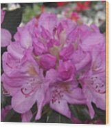 Soft Purple Rhododendron  Wood Print