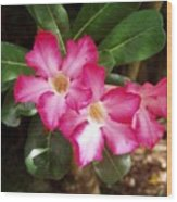 Pink Rhododendron Wood Print