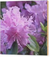 Light Purple Rhododendron With Leaves Wood Print