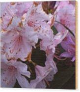 Pink Rhododendrums  Wood Print