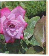 Pink Rose 1 Wood Print