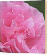 Pink Rose - 2 Wood Print