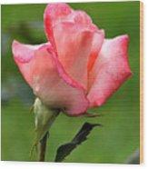 Pink Rose 3 Wood Print