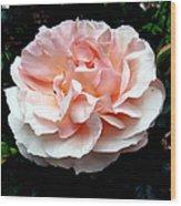 Pink Rose 4 Wood Print