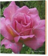 Pink Rose After Rain Wood Print