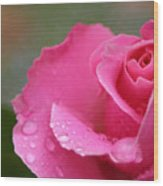 Pink Rose After The Rain Wood Print