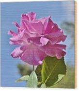 Pink Rose Against Blue Sky I Wood Print