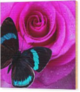 Pink Rose And Black Blue Butterfly Wood Print