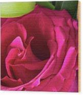 Pink Rose And Bud Close-up Wood Print