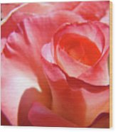 Pink Rose Art Prints Floral Summer Rose Flower Baslee Troutman Wood Print