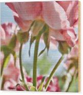 Pink Rose Back Light Wood Print