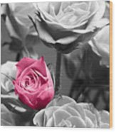 Pink Rose Wood Print by Blink Images