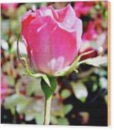 Pink - Rose Bud - Beauty Wood Print