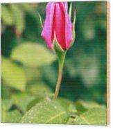 Pink Rose Bud Wood Print