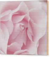 Pink Rose Bud Just Starting To Open Wood Print