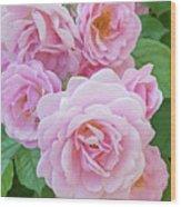 Pink Rose Cluster II Wood Print
