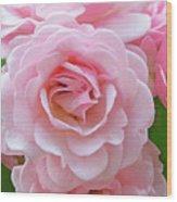 Pink Rose Cluster IIi Wood Print