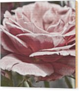 Pink Rose Faded Wood Print
