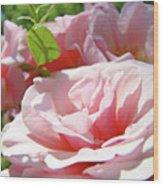 Pink Rose Flower Garden Art Prints Pastel Pink Roses Baslee Troutman Wood Print