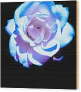 Pink Rose Has The Blues Wood Print