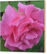 Pink Rose In Profile Wood Print