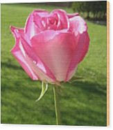 Pink Rose In The Sunlight Wood Print