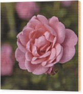 Pink Rose Instagram Wood Print