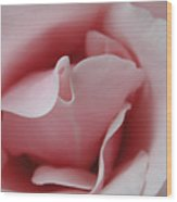 Pink Rose Kiss Wood Print