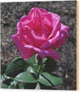 Pink Rose Wood Print by Luke Moore