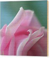 Pink Rose  Wood Print