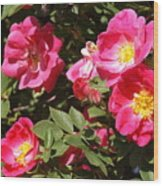 Pink Rose Of Sharon Blooms      Spring     Indiana Wood Print