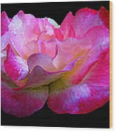 Pink Rose On Black 4 Wood Print