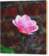 Pink Rose On Red Brick Wall Wood Print
