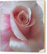 Pink Rose Painting Wood Print