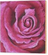 Pink Rose Pastel Painting Wood Print