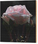 Pink Rose Silhouette 2 Wood Print