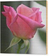 Pink Rose Squared Wood Print