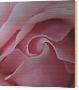 Pink Rose Swirl Wood Print