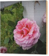 Pink Rose Wood Print by Valeria Donaldson