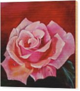 Pink Rose With Dew Drops Jenny Lee Discount Wood Print