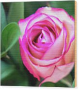Pink Rose With Leaves Wood Print