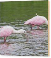 Pink Roseate Spoonbills Feeding Wood Print